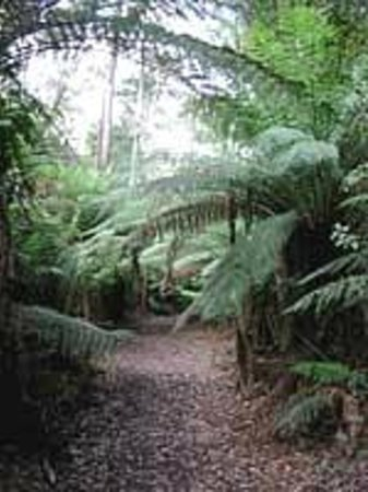 Koonya, Australia: nature walk into rainforest