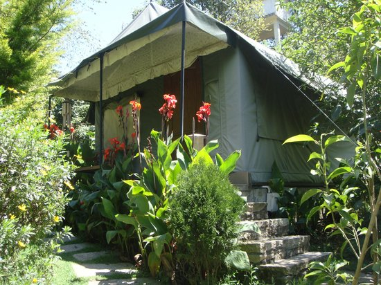 The Fern Creek :                                     Our tent