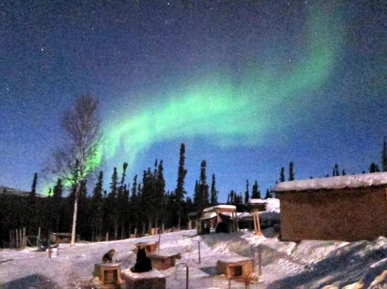 1st Alaska Outdoor School:                                     Dog Sledding & Aurora Viewing at Sirius Sled Dog Tour