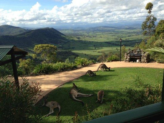 "Eaglereach Wilderness Resort:                   Backyard view from ""rocky mountain Lodge"""