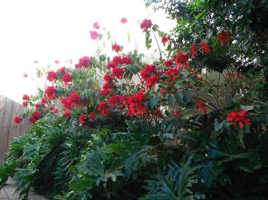 Casas de Piedra - Finca Punta del Lomo:                   Weelderige begroeiing