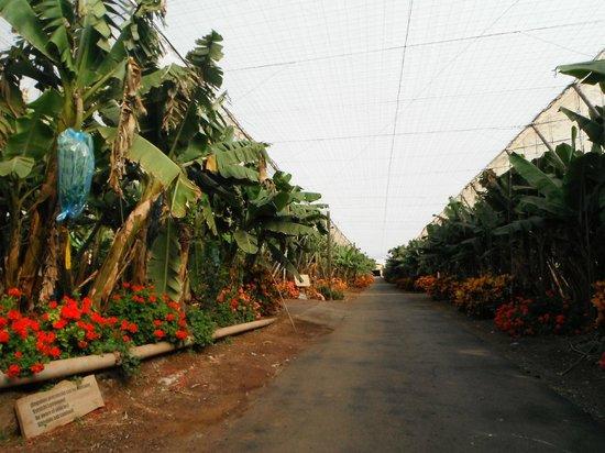 Casas de Piedra - Finca Punta del Lomo:                   Bananenplantage vrij toegankelijk