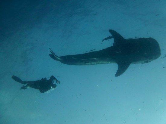 CSI: SAMUI Dive School :                   1st day as a Diver!!!