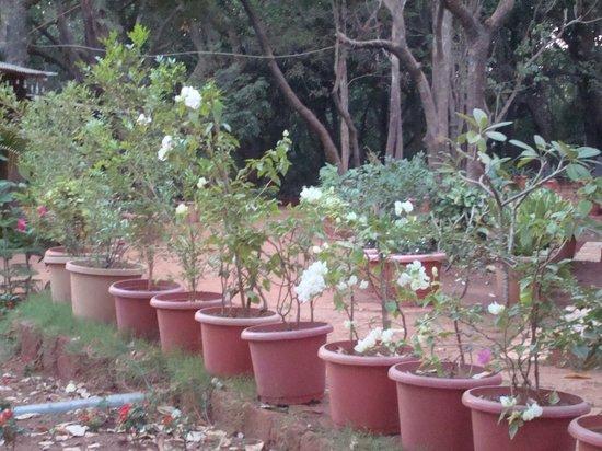 Westend Hotel:                                     garden