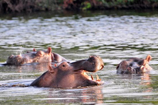 Bubaque, Guinea-Bissau: fotos do animal do parque natural