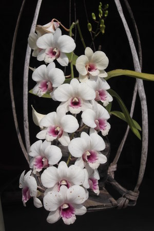 Carpe Diem: our orchid