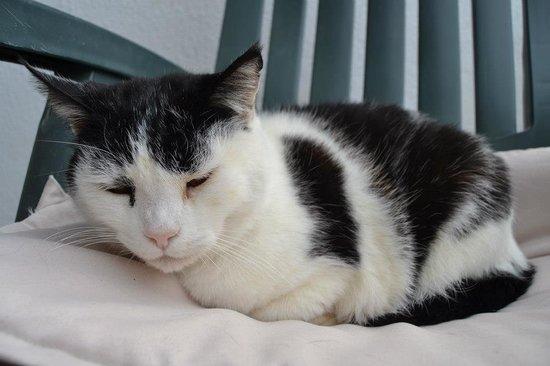 The Melting Pot Hostel Tarifa : El gato