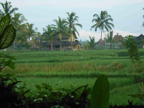 Nirwa Ubud Homestay:                                     view