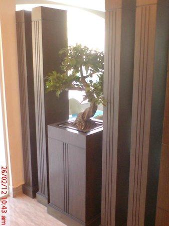 Al Zaitouna : bonzai tree in the hotel