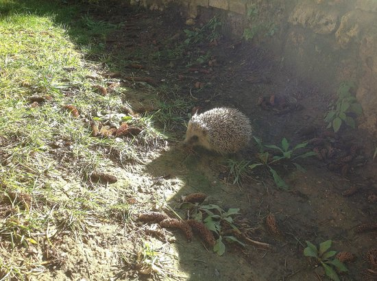 Torraccia di Chiusi: The young hedgehog enjoying first sun