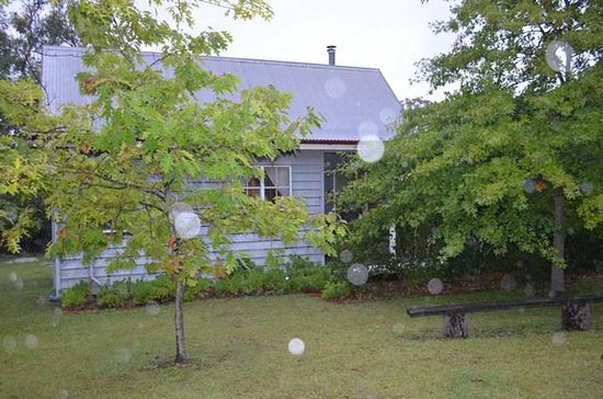 Diamondvale B&B Cottages:                   Forget-Me-Not Cottage in the rain