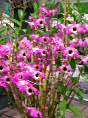 Pennsylvania Convention Center: The orchids were spectacular