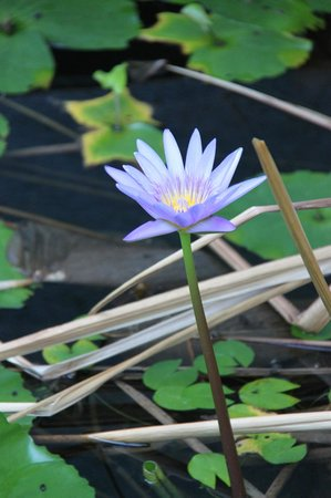 Samui Heritage Resort: Flower in grounds