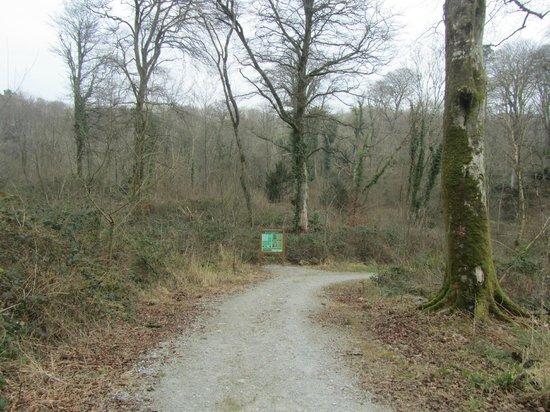 Curraghchase Forest Park