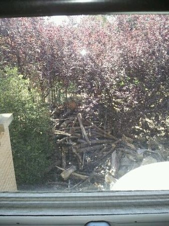 Lyndoch Hill:                   haha our lovely rose garden view? or lack there of