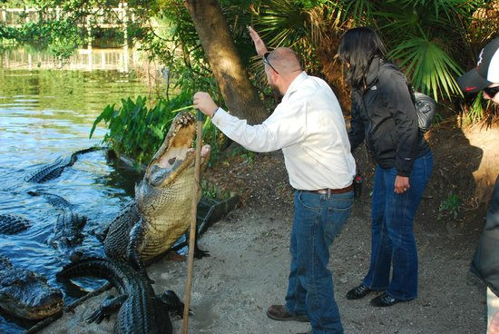 Gatorland: trainer for a day