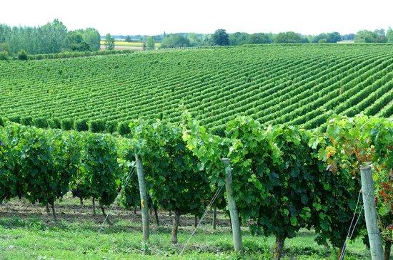 Office de Tourisme du Pays Thouarsais: le vignoble Thouarsais