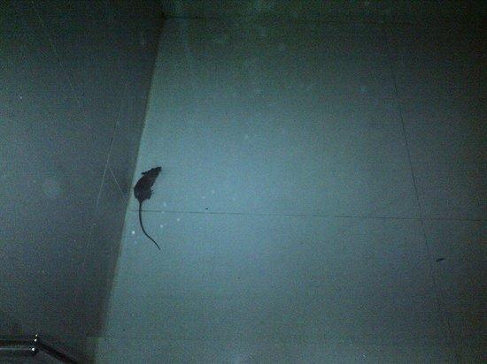 โรงแรมซีซั่นสยาม:                   mouse in bathroom