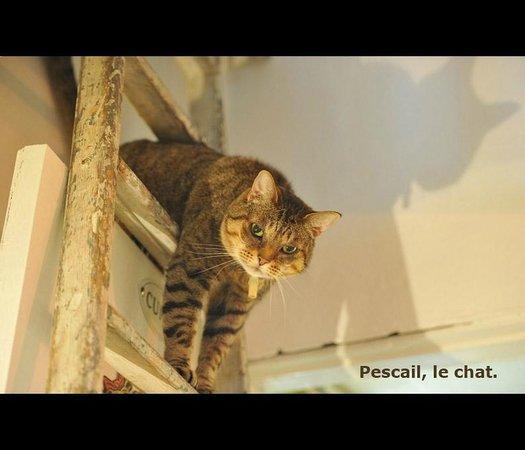 Chambre d'Autres et Suite du Merle Blanc: Le chat de la maison : Pescail !!!