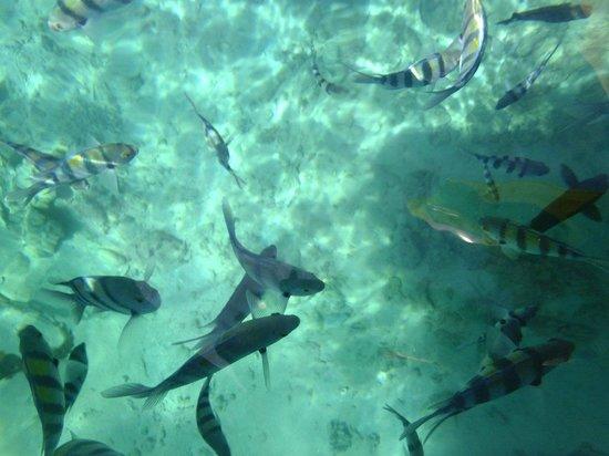 Island Garden Resort:                   Рыбки