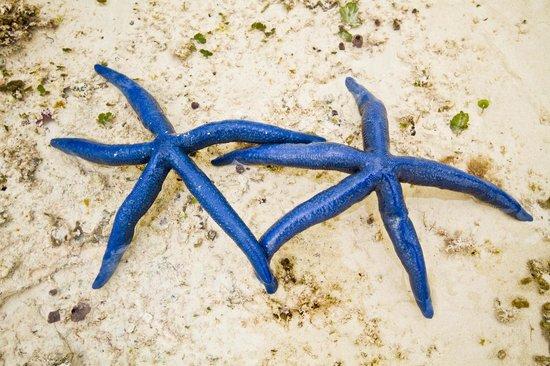 Samaki Lodge & Spa:                   le stelle blu della spiaggia di Uroa                 