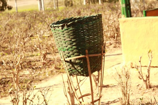 Nature Hunt Eco Camp, Kaziranga:                   Dustbins