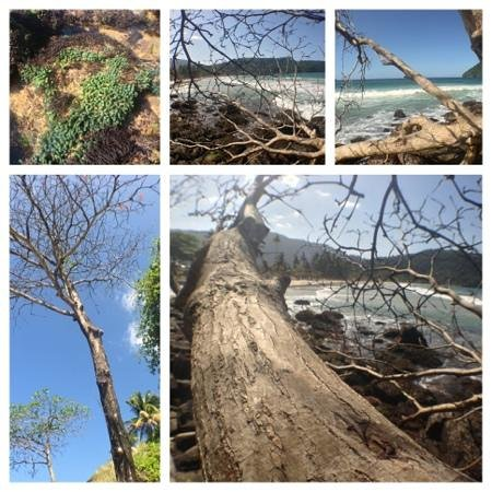 Maracas Bay: Unspoiled Nature