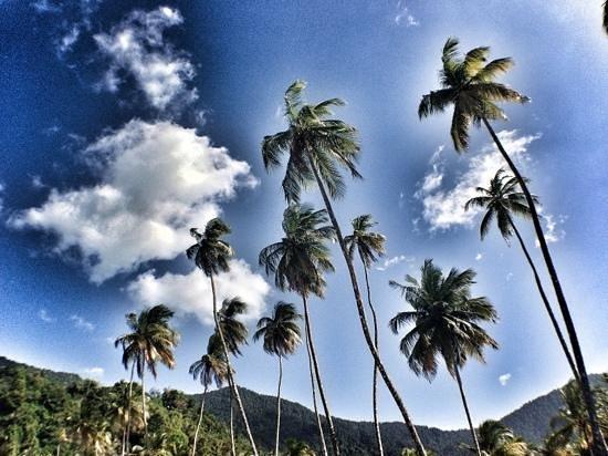Maracas Bay : the trees