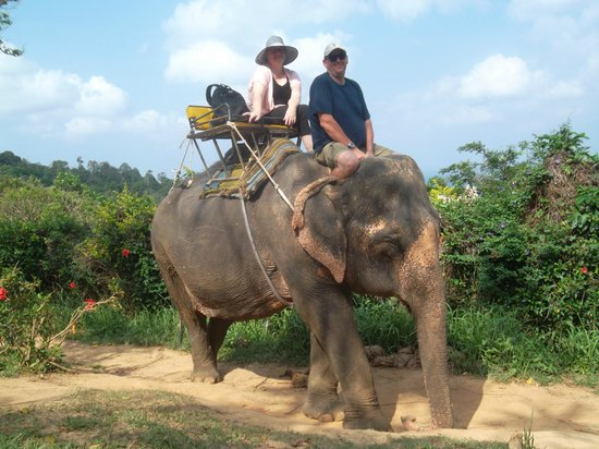 a stroll with yum yum 3 picture of kokchang safari elephant trekking kata beach tripadvisor. Black Bedroom Furniture Sets. Home Design Ideas