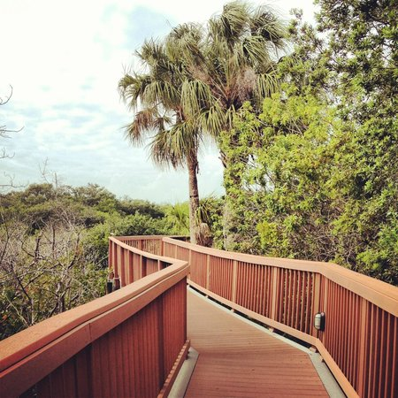 Grand Hyatt Tampa Bay:                   The boardwalk/nature walk