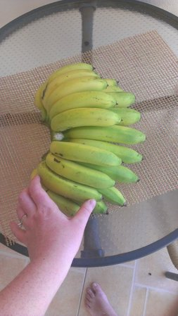 Marblue Villa Suites:                   Tree fresh bananas we bought from the back of a car. Delicious!