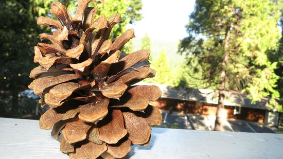 Narrow Gauge Inn:                   pinecone on our seating area outside our door with nice views