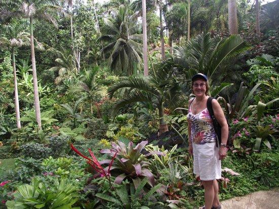 باترفلاي بيتش هوتل: Hunte's garden