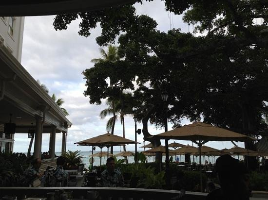 Moana Surfrider, A Westin Resort & Spa :                   underneath the banyan tree