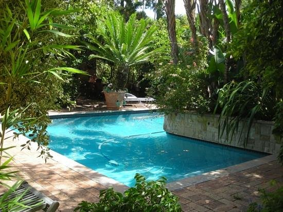 Treetops Guest House:                   The heated pool