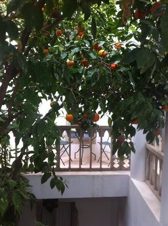 Riad Safa:                   Orange tree outside our Zanzibar room