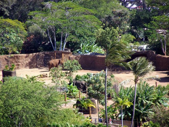 Queen Kapiolani Hotel: Elephant enclosure at the Honolulu Zoo.