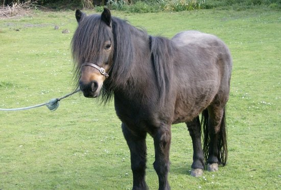 Delamere Self Catering Cornwall: Pickles the Pony
