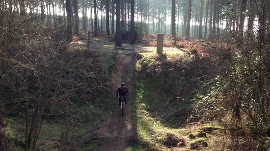 Thetford Forest Park: Riding down into the pit