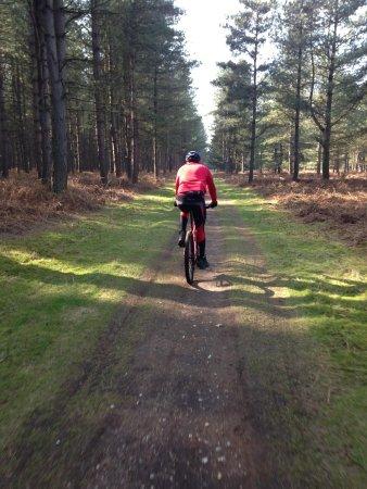 Thetford Forest Park: Bike riding in Thetford Forest