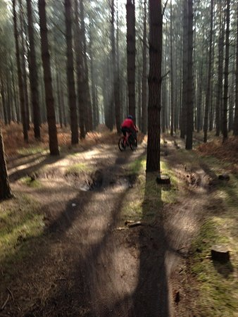 Thetford Forest Park: Singletrack in Thetford Foresy