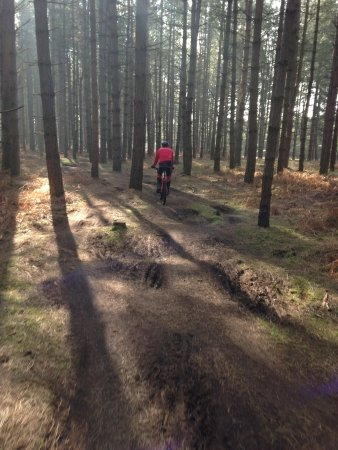 Thetford Forest Park: Singletrack Lime Burner trail