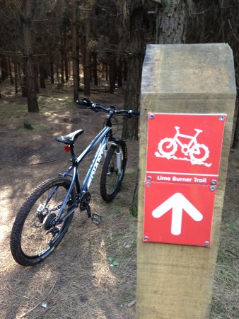 Thetford Forest Park: Well signposted singletrack