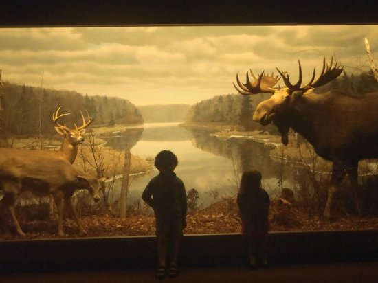 Nova Scotia Museum of Natural History: the moose