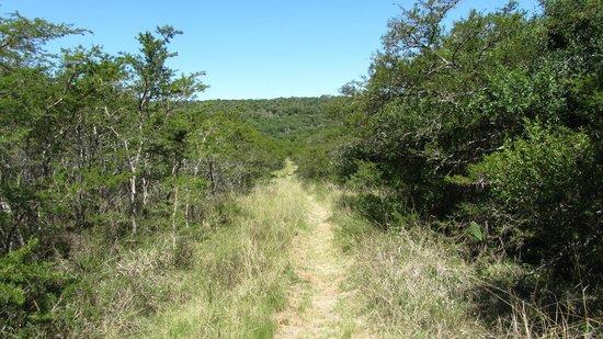 Sebumo Tude Nature's Lounge:                   MTB Trail Tal