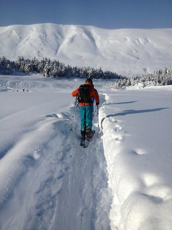 Wild Alpine - Day Tours: Backcountry ski touring through the trees and up into the alpine