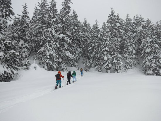 Wild Alpine - Day Tours: Backcountry ski touring into the trees