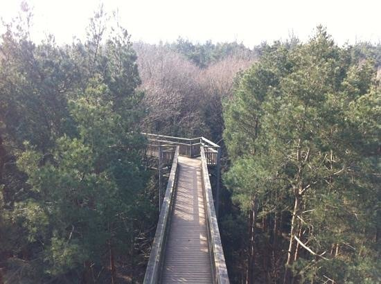 Hartwell, UK:                   Tree Top Walk