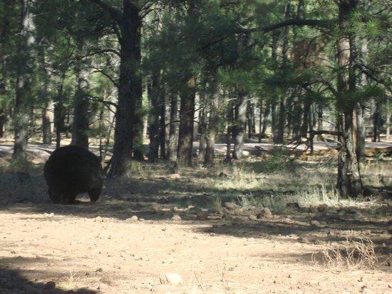 Bearizona Wildlife Park:                   more bears