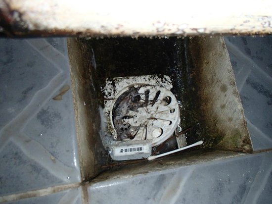 BaleKu:                   shower drain